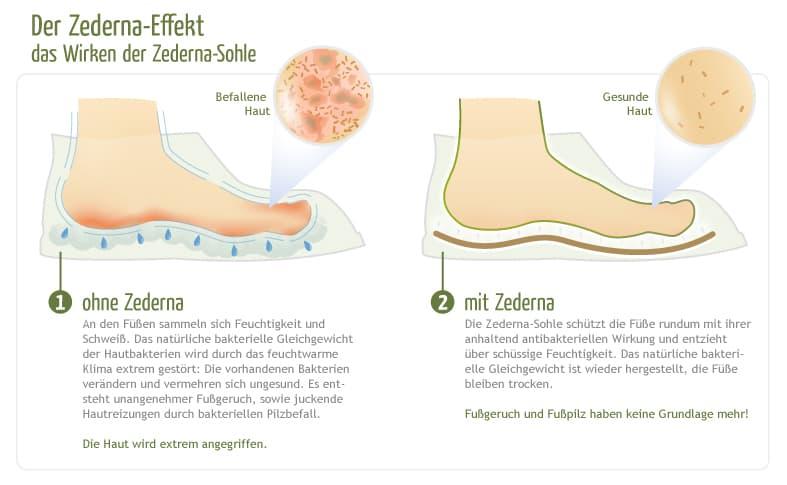 Zederna-Effekt-PR_Schaugrafik01