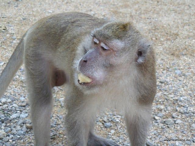 am Affenfelsen