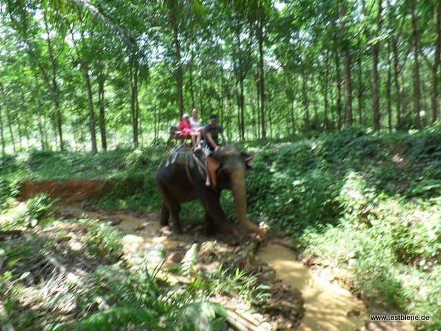 Ausflug mit dem Elefanten im Dschungel