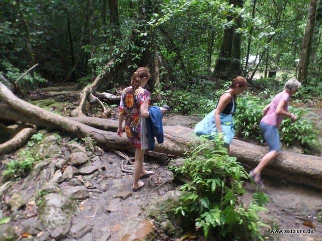 Tour durch den Dschungel