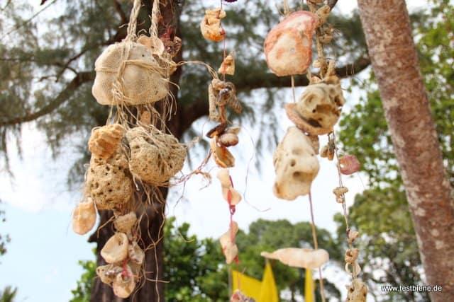 Muscheln und Korallen am Baum