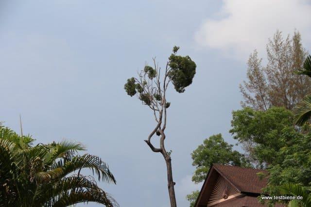 exotische Bäume ragen in den Himmel